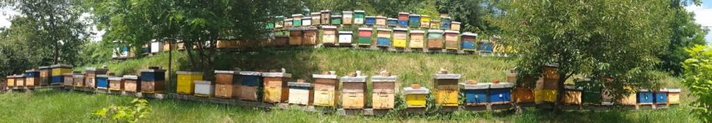 Naš pčelinjak